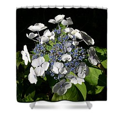 Shower Curtain featuring the digital art Hydranga by Claude McCoy