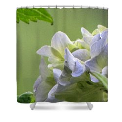 Shower Curtain featuring the photograph Hydrangea Blossom by Katie Wing Vigil