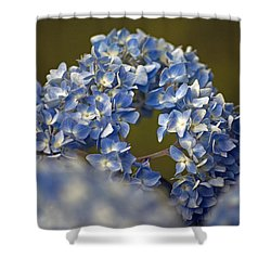 Shower Curtain featuring the photograph Hydrangea by Elsa Marie Santoro