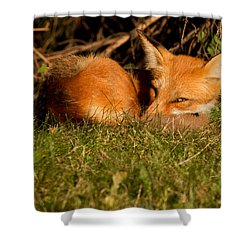 I Can See You Shower Curtain by Mircea Costina Photography