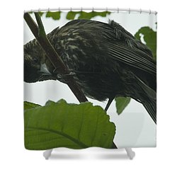 I See You Shower Curtain by Rod Wiens