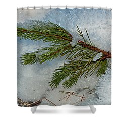 Shower Curtain featuring the photograph Ice Crystals And Pine Needles by Tikvah's Hope
