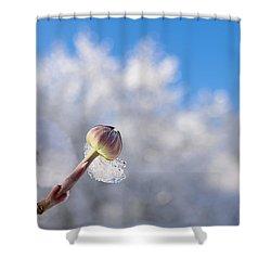 Iced Dogwood Shower Curtain