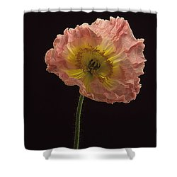Iceland Poppy 3 Shower Curtain by Susan Rovira