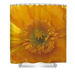 Shower Curtain featuring the photograph Iceland Poppy 4 by Susan Rovira