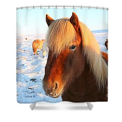 Shower Curtain featuring the photograph Icelandic Horse by Milena Boeva