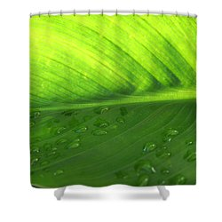 Illuminate Shower Curtain by Angela Hansen