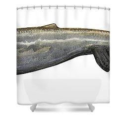 Illustration Of A Plotosaurus Shower Curtain by Sergey Krasovskiy