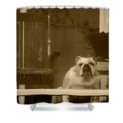 I'm Waiting For You Shower Curtain by Kym Backland