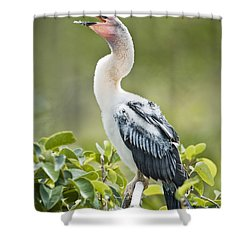 Immature Anhinga Shower Curtain by Patrick M Lynch