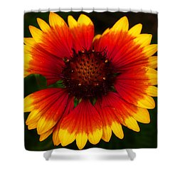 Shower Curtain featuring the photograph Imperfect Beauty by Milena Ilieva