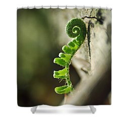 In A Magical Wood Shower Curtain by Rebecca Sherman