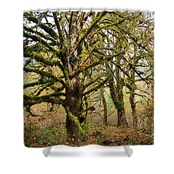 In The Rain Forest Shower Curtain
