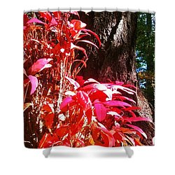 In The Shelter Of Your Arms Shower Curtain