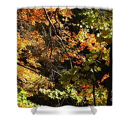 In The Woods Shower Curtain by Kathleen Struckle