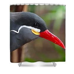 Shower Curtain featuring the photograph Inca Tern by Julia Wilcox