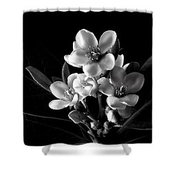 Indian Hawthorn In Black And White Shower Curtain