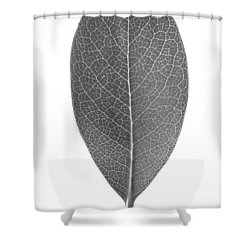 Indian Hawthorn Leaf Shower Curtain