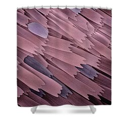 Indian Meal Moth Wing Sem 210x Shower Curtain by Albert Lleal
