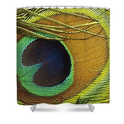 Indian Peafowl Pavo Cristatus Male Shower Curtain by Gerry Ellis