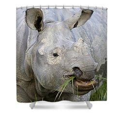 Indian Rhinoceros Grazing Kaziranga Shower Curtain by Suzi Eszterhas
