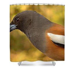 Indian Treepie. A Portrait. Shower Curtain by Fotosas Photography