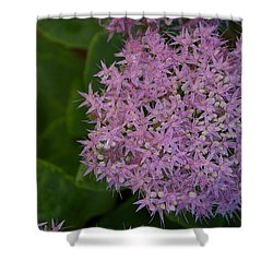 Shower Curtain featuring the photograph Inner White by Joseph Yarbrough