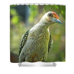 Shower Curtain featuring the photograph Inquisitive Woodpecker by Debbie Portwood