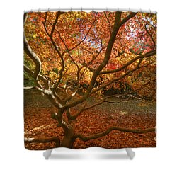 Shower Curtain featuring the photograph Inside An Acer by Clare Bambers
