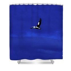 Shower Curtain featuring the photograph Into The Blue by Blair Stuart