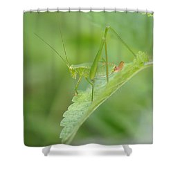 Iridescent Green Beauty On Lemon Balm Shower Curtain