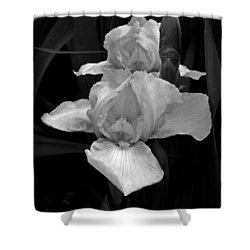 Shower Curtain featuring the photograph Iris by David Pantuso