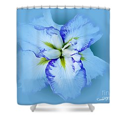 Iris In Blue Shower Curtain