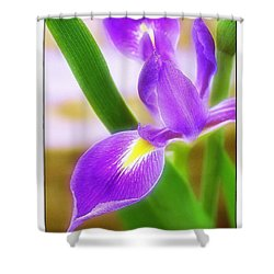 Shower Curtain featuring the photograph Iris On Pointe by Judi Bagwell