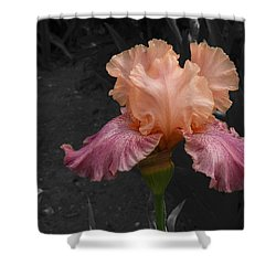 Shower Curtain featuring the photograph Iris2 by David Pantuso