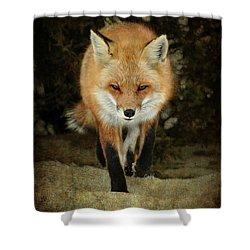 Island Beach Fox Shower Curtain by Sami Martin