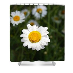 Shower Curtain featuring the photograph Isn't That A Daisy by Tony Cooper