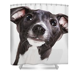 Italian Greyhound Puppy Spruce Grove Shower Curtain by Leah Bignell