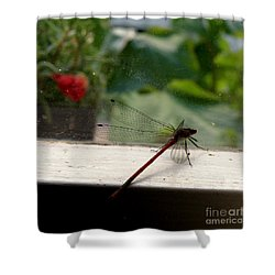 It's Always Greener Shower Curtain by Lainie Wrightson