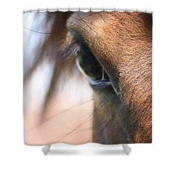 I've Got My Eye On You Shower Curtain by Donna G Smith