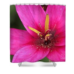 Shower Curtain featuring the photograph Ixia Named Venus by J McCombie
