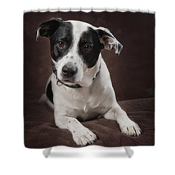 Jack Russell Terrier On A Brown Studio Shower Curtain by Corey Hochachka