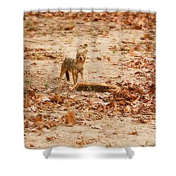 Shower Curtain featuring the photograph Jackal Standing Over Deer Kill by Fotosas Photography