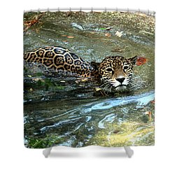 Shower Curtain featuring the photograph Jaguar In For A Swim by Kathy  White