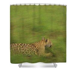 Jaguar Panthera Onca Running Shower Curtain by Claus Meyer