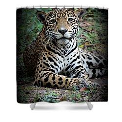 Shower Curtain featuring the photograph Jaguar Portrait by Kathy  White