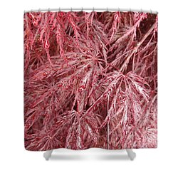 Shower Curtain featuring the photograph Japanese Maple by Laurel Best