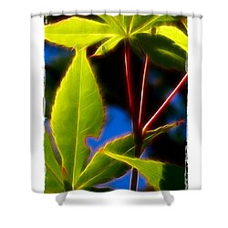 Shower Curtain featuring the photograph Japanese Maple Leaves by Judi Bagwell