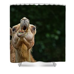 Jaw Dropping Shower Curtain by Karol Livote