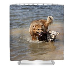 Shower Curtain featuring the photograph Jesse And Gremlin Sharing by Jeannette Hunt
